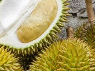 Le durian, un fruit à part