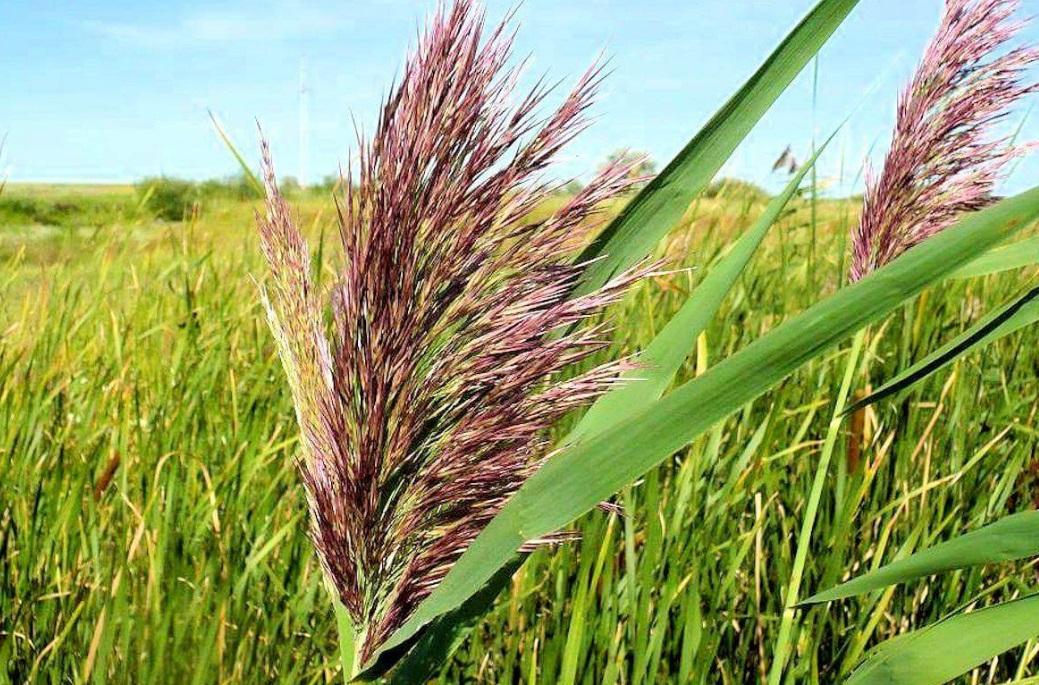 Les différents types de céréales