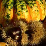 Quels sont les ingrédients de saison à privilégier en automne ?