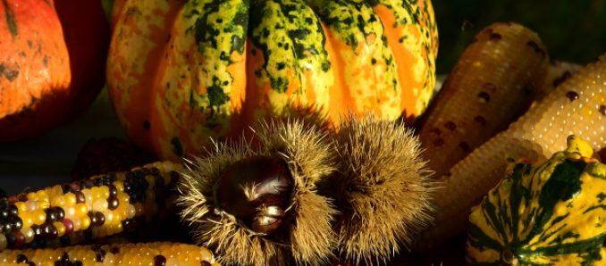 Légumes qui poussent l'automne